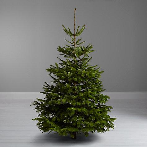 Nordmann Fir Christmas Tree - Real Xmas Trees